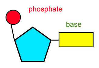 Quaternary Structure Of Dna Modularity: Dude, How ...