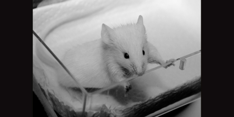 mouse copy
