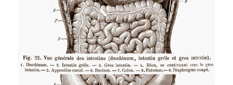 digestive-system-granger