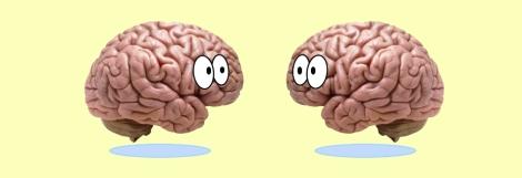 cortex_header