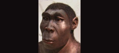 Homo_erectus_new