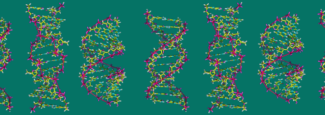 A-DNA,_B-DNA_and_Z-DNA