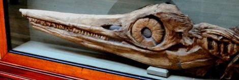 Anning's_Ichthyosaur