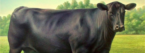 angus-cow-182m-1-2007-hans-droog