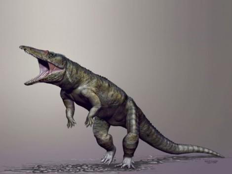sn-crocodylomorphH
