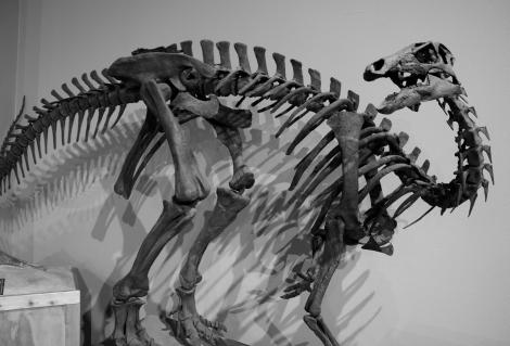 Camptosaurus_dispar
