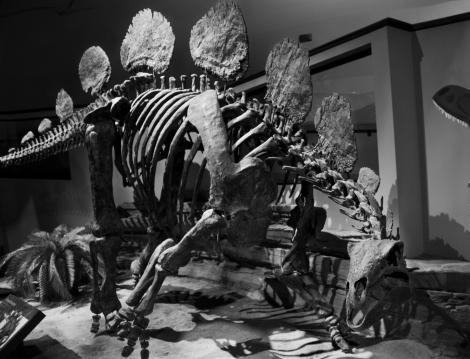 Hesperisaurus