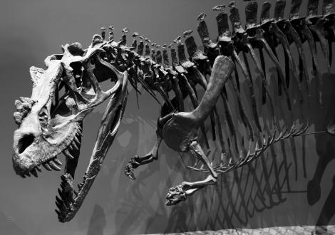 Marshosaurus_bicentesimus