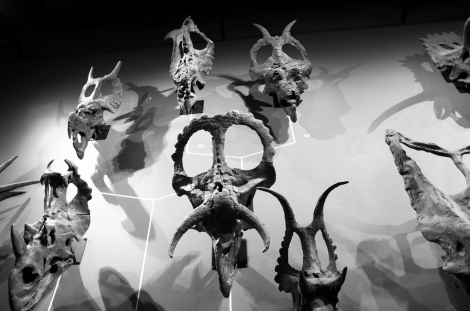 Triceratops_wall