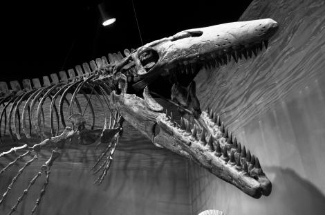 Tylosaurus_proriger