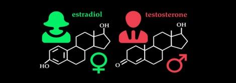 estrogen-and-testosterone