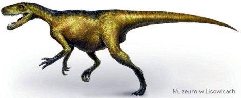 Materialy Muzeum Paleontologicznego w Lisowicach